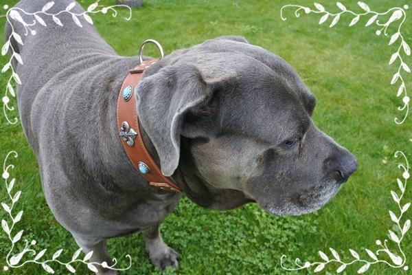 Lehmann-exklusives-Hundehalsband-ontario-edelhund-braun-Luxus-Hundehalsband