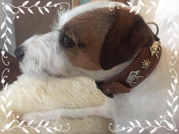 Hundehalsband-Jack-Russel-trachtenhalsband-Edelweiss
