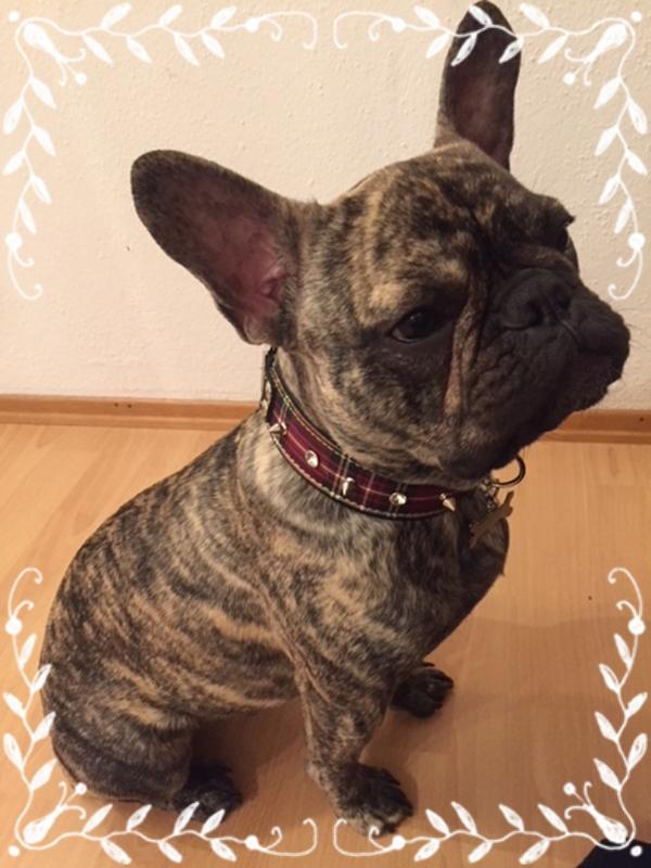 Yoda-Exklusives-Hundehalsband-franz-sische-Bulldogge-Edelhund