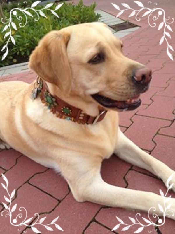Greta-mit-luxus-hundehalsband-von-edelhund