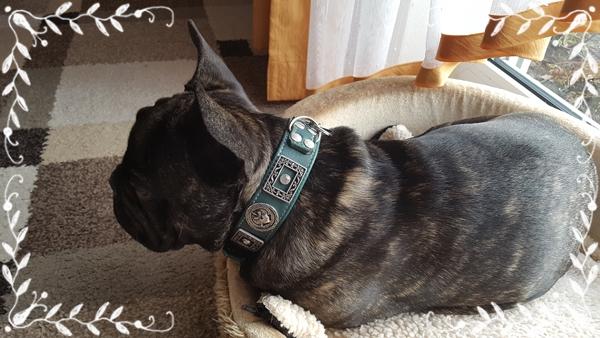 Oskar-hundehalsband-gr-n-franz-sische-Bulldogge