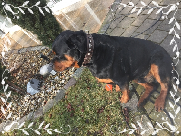 Designer-breites-Hundehalsband-braun-Rottweiler