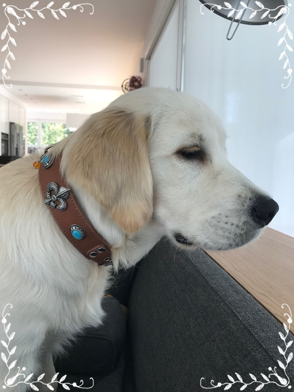 momo-halsband-leder-ontario